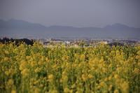 山の辺 立春 - ratoの大和路