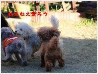 お庭で運動会!!なんでぼくだけ。。。by大祐 - さくらおばちゃんの趣味悠遊