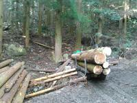 やっと間伐搬出 - 自伐型林業 施業日記