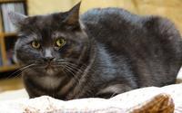 黒ねこ!集れ~~~~。。。 - ぎんネコ☆はうす
