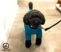 Hello Elle !! - Doggie Do!! / good dog and hello cat !!