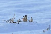 湖北の野鳥 - チョウ!お気に入り