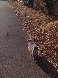 「散歩」エビ日記 - トウゲイと ネコと ソノタ