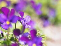 春花壇 - 瞳の記憶