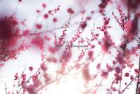 桃色吐息 - Photographie de la couleur