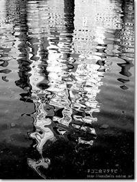 【み】水面:みなも - ネコニ☆マタタビ