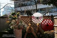 上野東照宮ぼたん苑で冬の牡丹祭り-NO3 - 自然のキャンバス