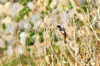 槻川に集う野鳥たち(サギ・イソシギ) - 何でも写真館