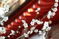 天神様の紅白梅 - 木洩れ日 青葉 photo散歩