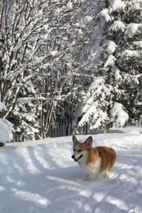 雪山散歩 - NorthTrek