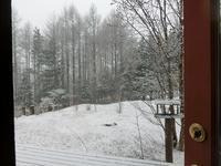 雪です! - 風路のこぶちさわ日記