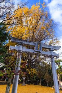 京都の紅葉2016 三栖神社の紅葉と大銀杏 - 花景色-K.W.C. PhotoBlog