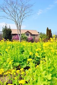 日出町/大神ファーム/ガーデンは春の色 - ゆっくり、ぱちぱちり