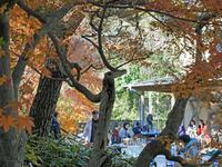 2・11紅梅の美しいギャラリー檜松で第4回山の恵みに乾杯!」 - 北鎌倉湧水ネットワーク