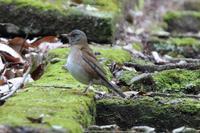 居ても見えないアオバト - 野鳥写真日記 自分用アーカイブズ