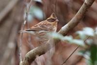 アオバト集結(の写真はなし) - 野鳥写真日記 自分用アーカイブズ