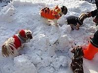 寒くても自宅ランで遊ぶ4ワン達 - わんわん・パラダイス