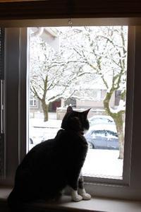 大雪のバンクーバー、オンライン・グロサリー・ショッピング(SPUD)が便利! - バンクーバー日々是々