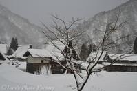 富山散歩~県西部279~菅沼合掌集落の冬景色 - Tomの一人旅~気のむくまま、足のむくまま~