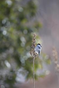 雪の里山 - healing-bird