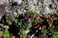 立春 - 紀州里山の蝶たち