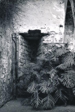 Web写真展 Sicily.7 online photo exhibition - サイレントなムービー  movie of the silence