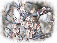 梅 満開 - 南風のデジタル写真日記