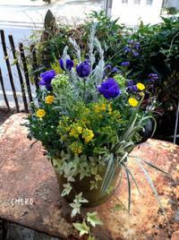 補色対比 - CHIROのお庭しごと