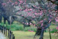 目からうろこ!撮影テクニック&プリントアドバイス 岡山後楽園 - Yuruyuru Photograph