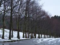 #521 樹木公園 - 想い出cameraパートⅢ