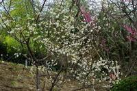 2月6日 埼玉県花と緑の振興センター - てしやから君の撮影日記
