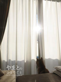 陽だまり 【動画あり】 - yamatoのひとりごと