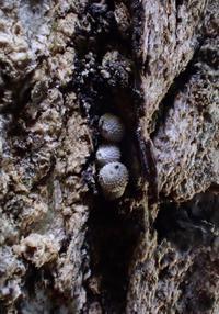 立春、汗をかきながら越冬卵探し - 蝶超天国