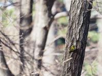 鳥撮影に挑戦 その1 - お寺や神社、古い町並み、鉄道、他色々の写真ブログ