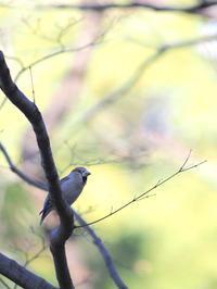 鳥撮影に挑戦 その2 - お寺や神社、古い町並み、鉄道、他色々の写真ブログ