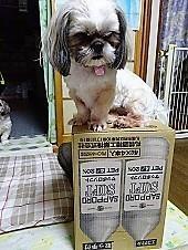 今日の栞さん - わんわん・パラダイス