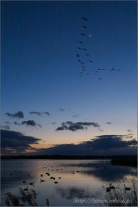 月と金星、そして渡り鳥 - 遥かなる月光の旅