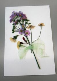 ハガキ - Atelier dolly 押し花教室