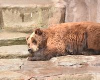 雨の動物園 - 徒然日記