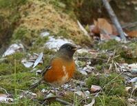 今日はこれだけ里山 - TACOSの野鳥日記