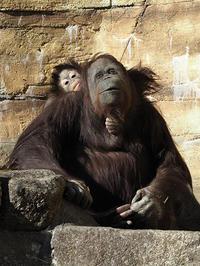 2月7日(火) 代理母 - ほのぼの動物写真日記