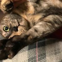 やめました - 賃貸ネコ暮らし|賃貸住宅でネコを室内飼いする工夫
