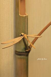 竹細工 1 - 晴れ時々そよ風