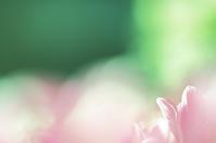 春の囁き - 「美は観る者の眼の中にある」