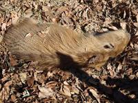 落ち葉に埋もれる - 動物園へ行こう