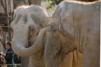 動物園で動物を見る時間って、どのくらい?何分? - 動物園のど!