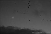 モノクローム - 遥かなる月光の旅