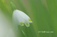 スノーフレーク - 花々の記憶  happy momo