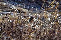 沼でくつろぐ水鳥たち - 季節の風を追いかけて