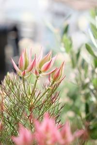 入荷のお花と駐車場のお話。 - mon dimanche blog